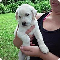 Adopt A Pet :: Anderson Pooper - Byhalia, MS