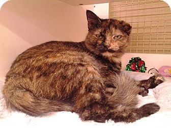 Domestic Shorthair Cat for adoption in Richmond, Virginia - Carla