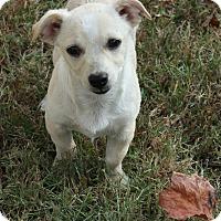 Adopt A Pet :: Papi - Brattleboro, VT