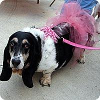Adopt A Pet :: Georgette - Fort Lauderdale, FL