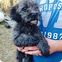 Adopt A Pet :: Nubzee - Charlemont, MA