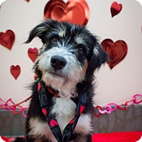 Adopt A Pet :: Banyan - Saskatoon, SK
