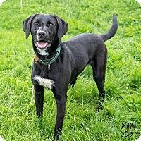 Adopt A Pet :: Richie - Naperville, IL