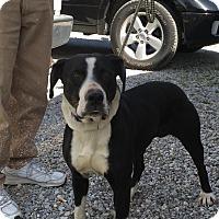 Adopt A Pet :: EMMA - Cadiz, OH