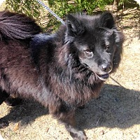 Adopt A Pet :: Missy - Fennville, MI