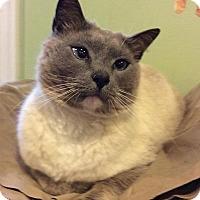 Adopt A Pet :: Gilbert - Breinigsville, PA