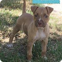 Adopt A Pet :: Adrienne - Sylvania, OH