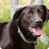 Adopt A Pet :: Silkie - Midlothian, VA