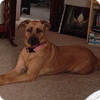 Adopt A Pet :: Courtesy Listing- Kenzi - Cedar Rapids, IA