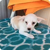 Adopt A Pet :: ERIC - Elk Grove, CA