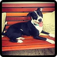 Adopt A Pet :: Huxley - Grand Bay, AL