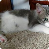 Adopt A Pet :: Ash - Philadelphia, PA