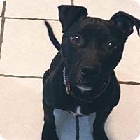 Adopt A Pet :: Manny - Middletown, RI