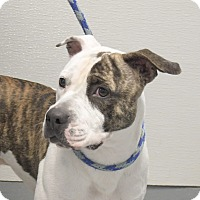 Adopt A Pet :: Woody - Yonkers, NY