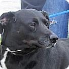 Adopt A Pet :: Cissy