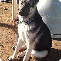Adopt A Pet :: Stryker - Victorville, CA