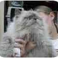 Adopt A Pet :: Hudson - Jacksonville, FL