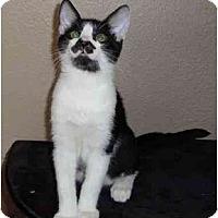 Adopt A Pet :: Carlos - Modesto, CA