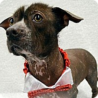 Adopt A Pet :: Cooper-Adoption pending - Bridgeton, MO