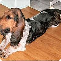 Adopt A Pet :: Binky - Phoenix, AZ