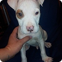 Adopt A Pet :: Zero - Scottsdale, AZ