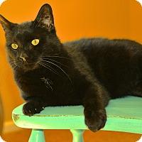 Adopt A Pet :: Clooney - St. Louis, MO