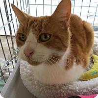 Adopt A Pet :: Linus - Raritan, NJ