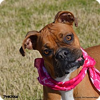 Adopt A Pet :: Precious - Patterson, CA