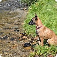 Adopt A Pet :: Anya - Hamilton, MT