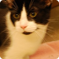 Adopt A Pet :: Browning - Salem, WV