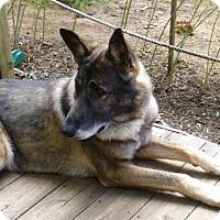Adopt A Pet :: Atticus 4499 - Sterling, VA