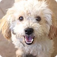 Adopt A Pet :: Dexter - adoption pending - Norwalk, CT