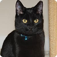 Adopt A Pet :: Bugs (and Bunny) - Fairfax, VA