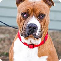 Adopt A Pet :: Rudy - Larned, KS