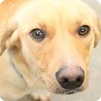 Adopt A Pet :: FANCY(WHERE WAS HER FAMILY???) - Wakefield, RI
