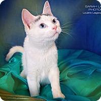 Adopt A Pet :: Kenzie - Cincinnati, OH