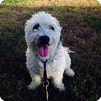 Adopt A Pet :: Lilo - Brooklyn, NY