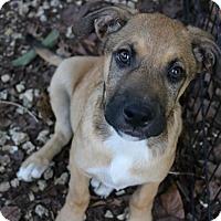 Adopt A Pet :: Gilbert (Susan) - Homestead, FL
