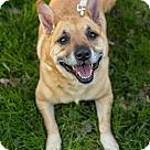 Adopt A Pet :: Kay Kay