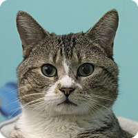 Adopt A Pet :: Moshe - North Branford, CT