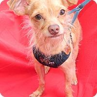 Adopt A Pet :: Wishbone - Umatilla, FL