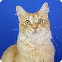 Adopt A Pet :: Apricot - Carencro, LA