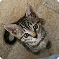Adopt A Pet :: Kat-erina - Burbank, CA