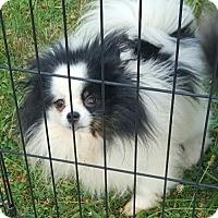 Adopt A Pet :: HAPPY JACK - Smithfield, PA