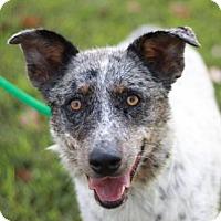 Adopt A Pet :: Lexi - Sparta, TN