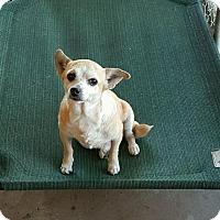 Adopt A Pet :: Honey - Hammond, LA