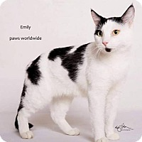 Adopt A Pet :: EMILY - Yucca Valley, CA