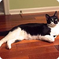 Adopt A Pet :: Toby - Lambertville, NJ