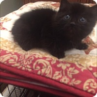 Adopt A Pet :: Sparky - available 12/17 - Sparta, NJ