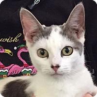 Adopt A Pet :: Spot - Sidney, ME